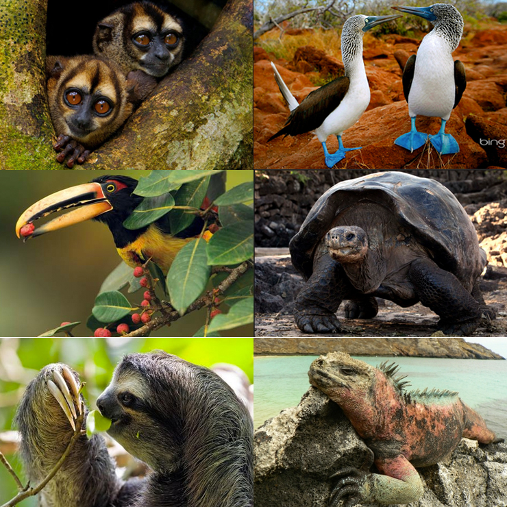 chaulafan-ecuador-animali