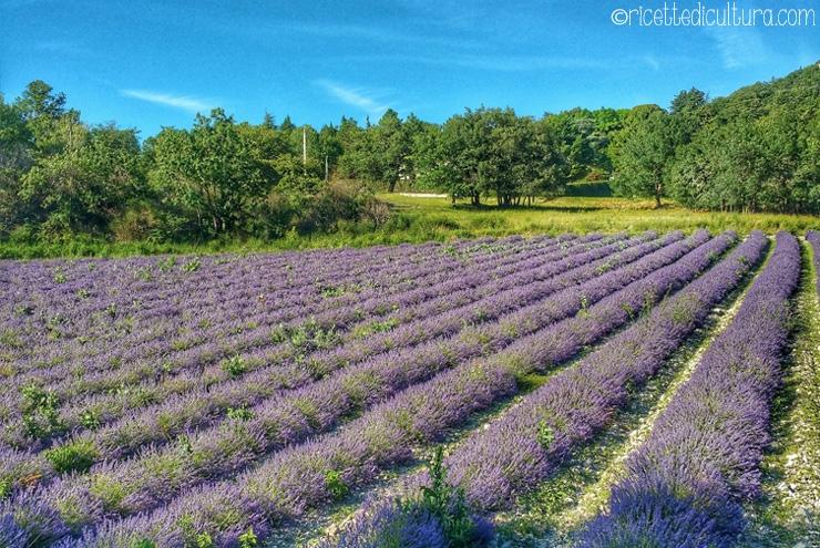 Drôme Provençale, viaggio nel tempo Patrimonio da scoprire a poche ore di auto dall'Italia