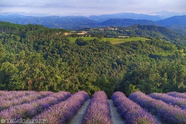 La lavanda a Sale San Giovanni Il paesello in Alta Langa fiorisce tra la metà di giugno e la metà di luglio
